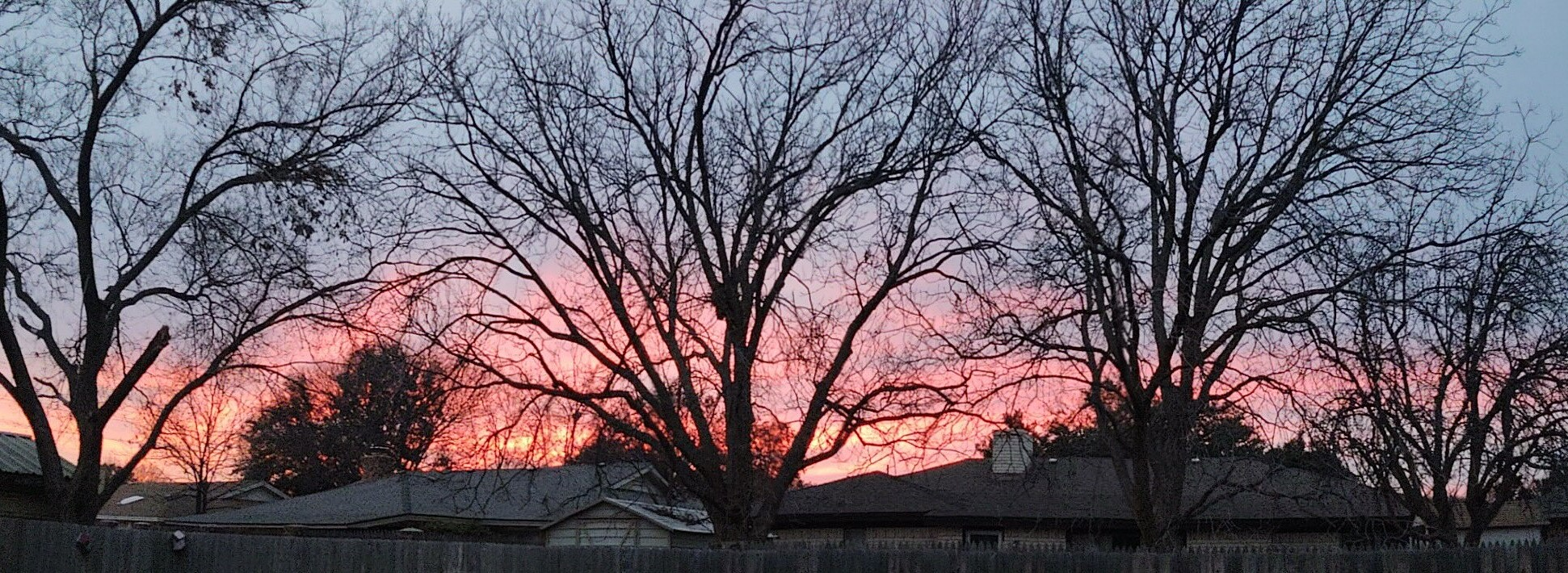 Picture of bare trees with red sky at sunset in the background. House rooftops and fence visible beneath.